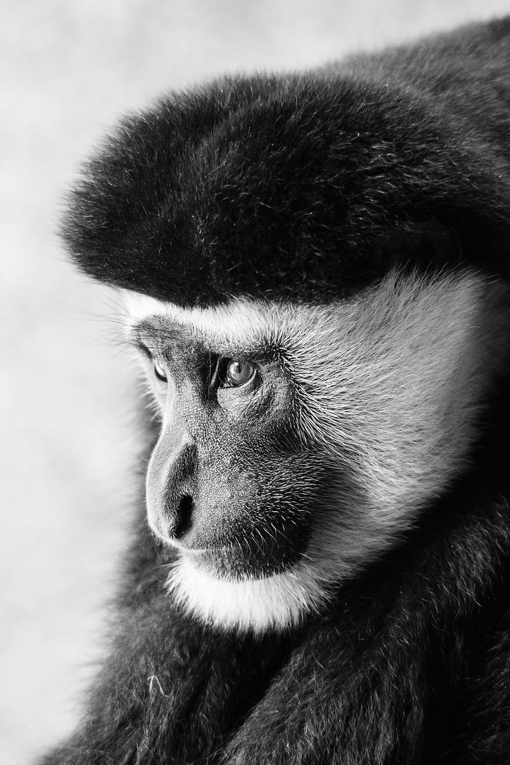 Alfie Bowen Animals photography monkey Miami artist young photographer black and white english talent