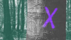 Zembla: Het beloofde bos
