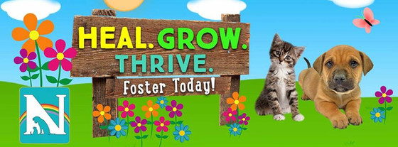 Heal. Grow. Thrive. Become an animal shelter foster care parent Noah's Ark Animal Welfare NAAWA