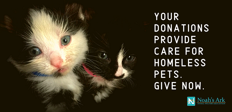Your donations provide care for homeless pets.png