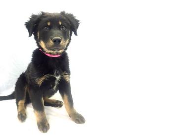Noah's Ark Animal Welfare Pet Resources Dog puppy bringing hom