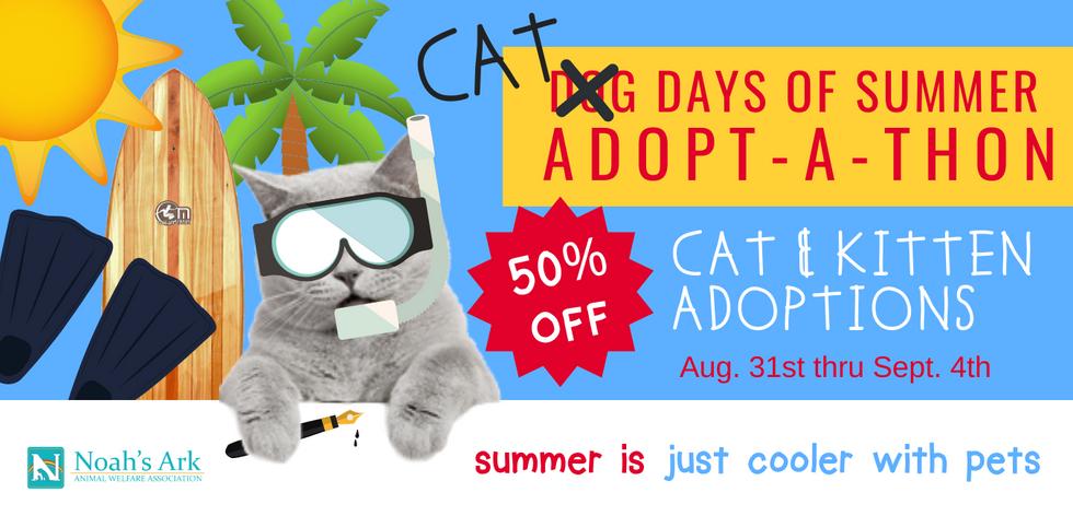 cat at days of summer website banner.png