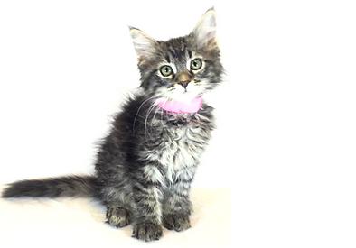 Noah's Ark Animal Welfare Pet Resources Cat Kitten bringing home new