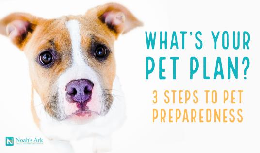 3 Steps to Pet Preparedness