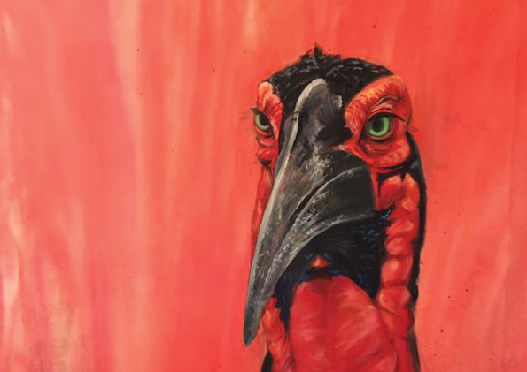 Ground Hornbill Painted