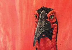 Ground Hornbill Painted