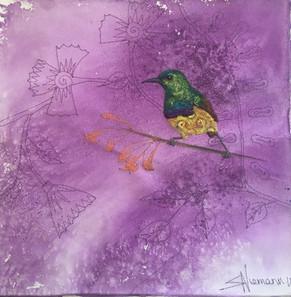 Collared sunbird - 30 X 30cm.jpg