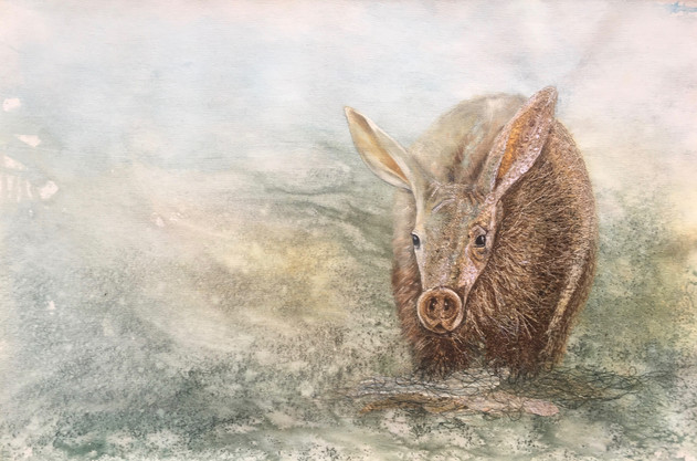 'Morning forage ' - The Aardvark 50 X76c