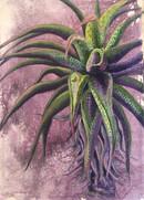 Aloe - 84 X 60 cm.jpg