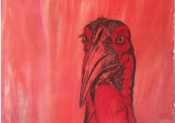 Ground Hornbill Painting
