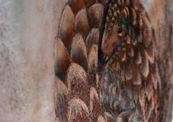 Pangolin Detail