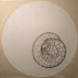 Pangolin Sketch