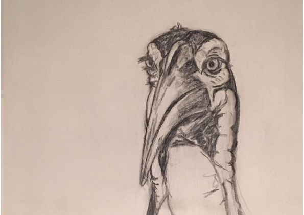 Ground Hornbill Sketch