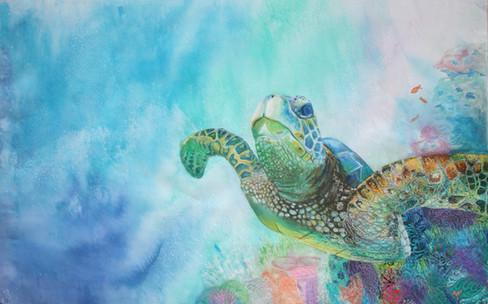 'Ocean wanderer'