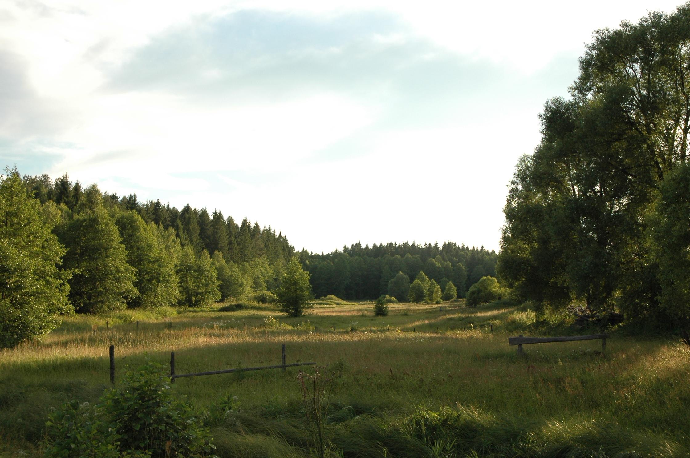 На лесных просторах