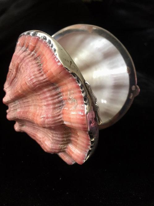 Specimen Shell Box