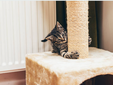 Cat scratching - how to prevent unwanted scratching