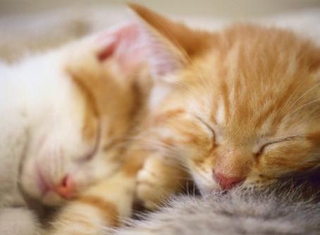 Early kitten socialization