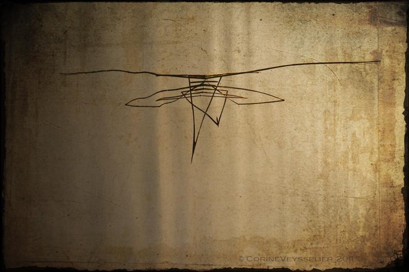 Dragonfly Clan