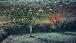 Sai che gli alberi parlano ?