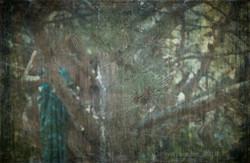 Le Dame Verdi della Collina