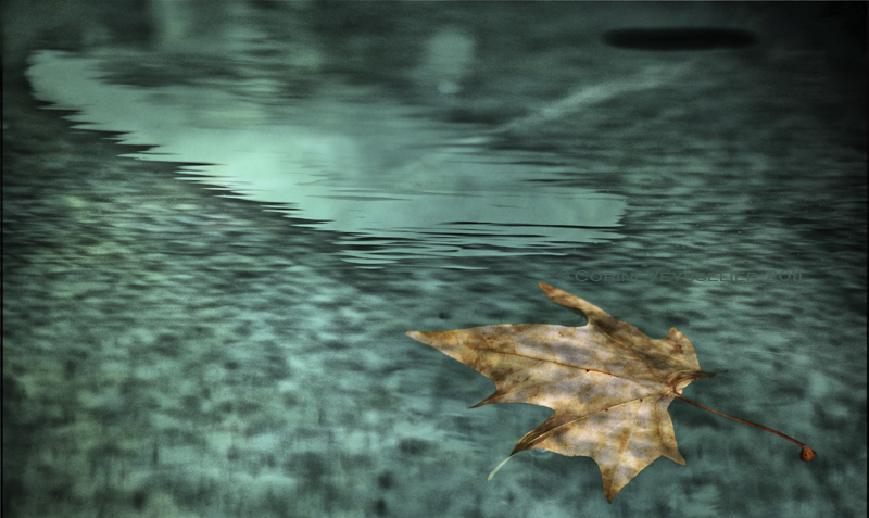The Leaf Who Wanted to Fly