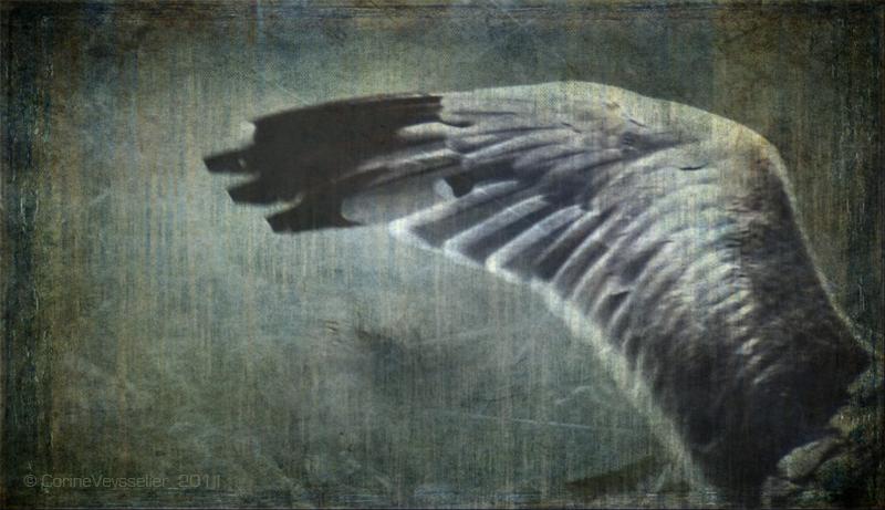 La leggenda di Hiyvv il gabbiano