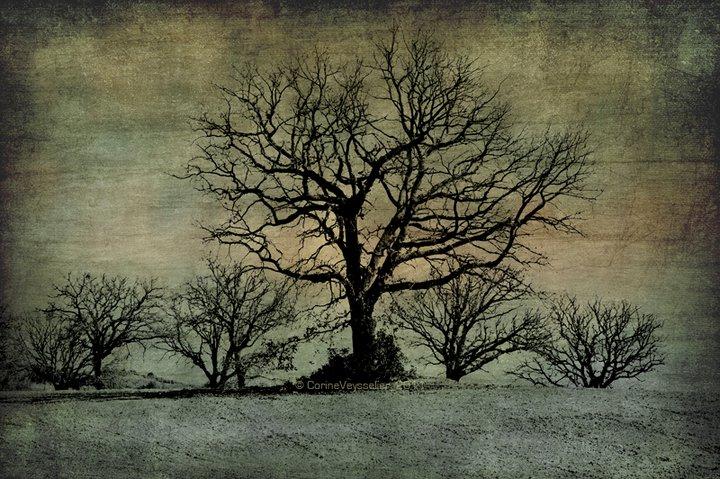 Les arbres qui demandent un roi