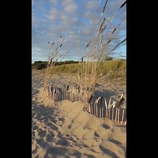 Plantation de plumes Edel Truda Festival l'Art est à la plage des Briantais - Lancieux 2020