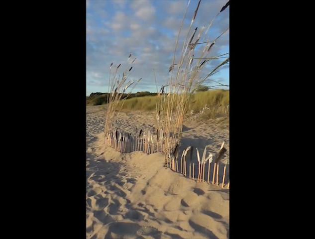 Plantation de plumes ----- Festival l'Art est à la plage des Briantais - Lancieux 2020