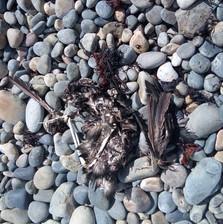 sentier-1 Photos animaux morts