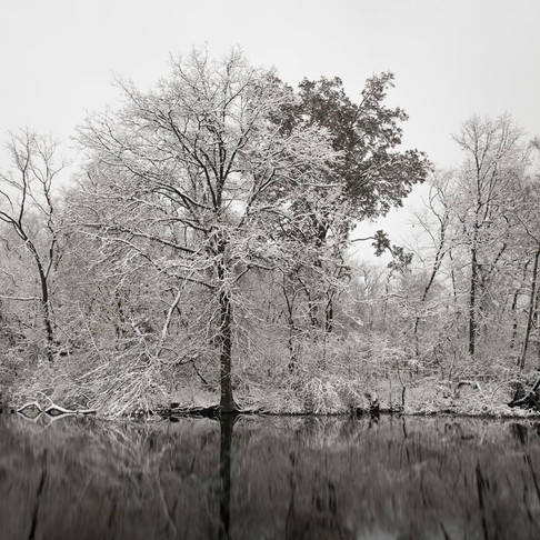 Fish_Luna_Winter.jpg