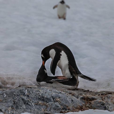 Moisés_Solis_Antártida.jpg