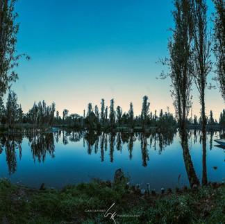 Árboles en Xochimilco