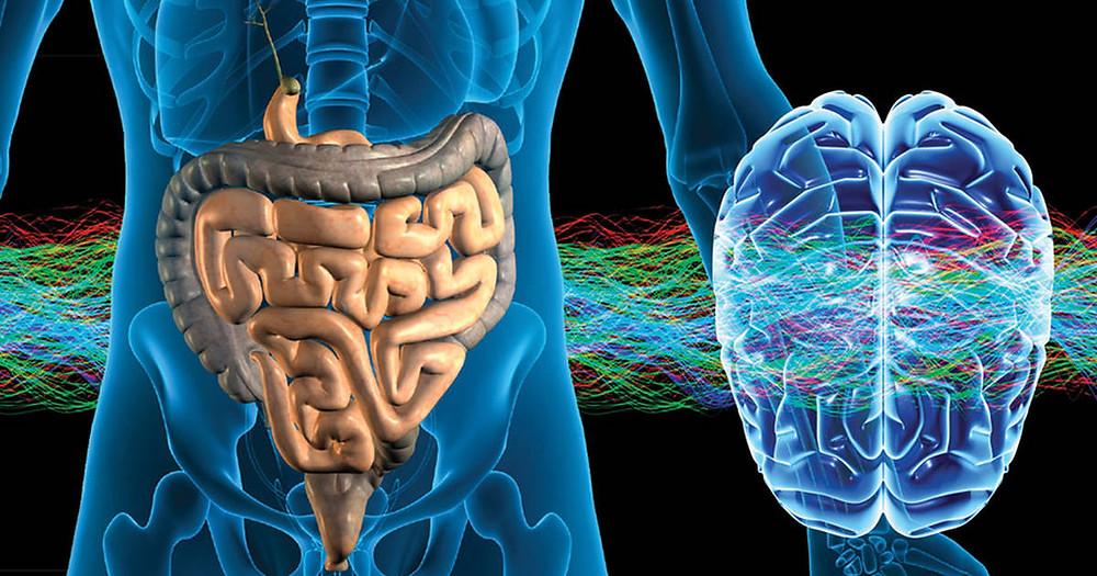 Intestino segunda cérebro