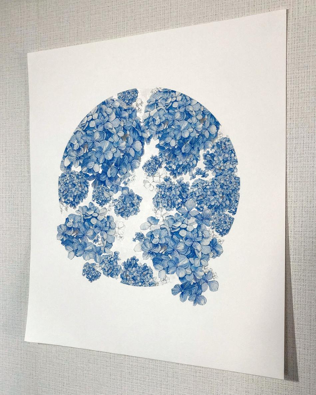 hydrangea | 紫陽花