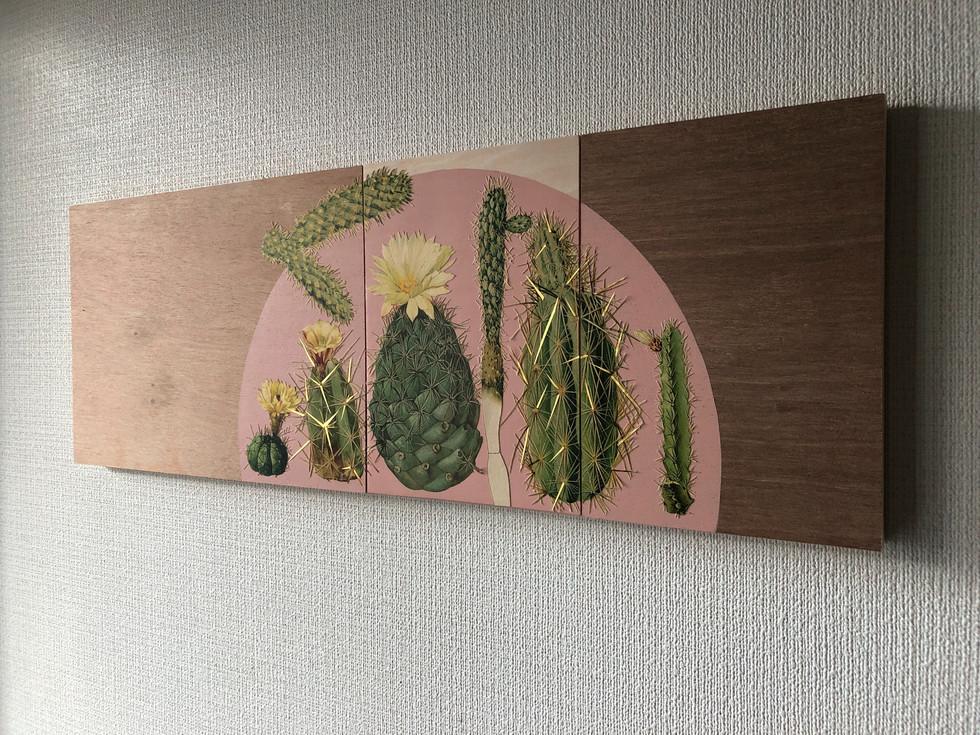 Cactus (pink)