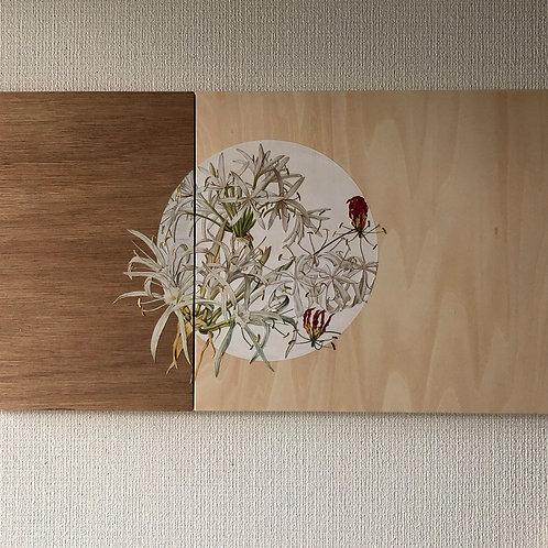 Lilies (gloriosa)