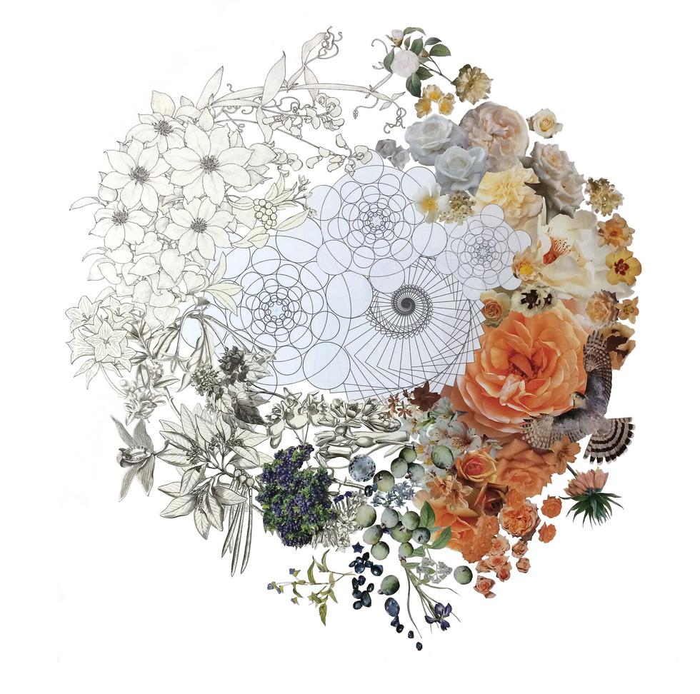 Color Wheel with Bird