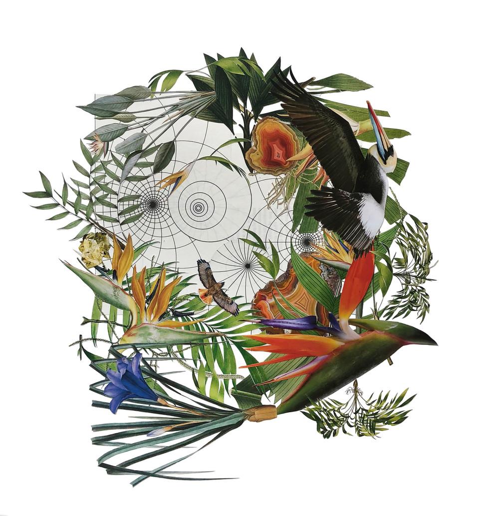 Color Wheel in the Jungle