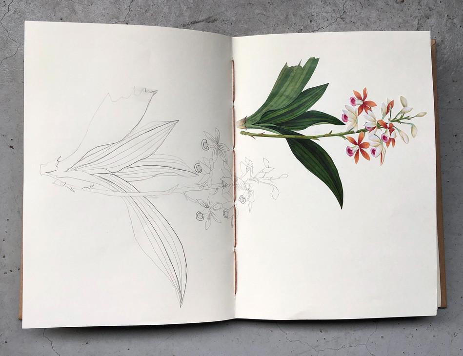 orchids, copied