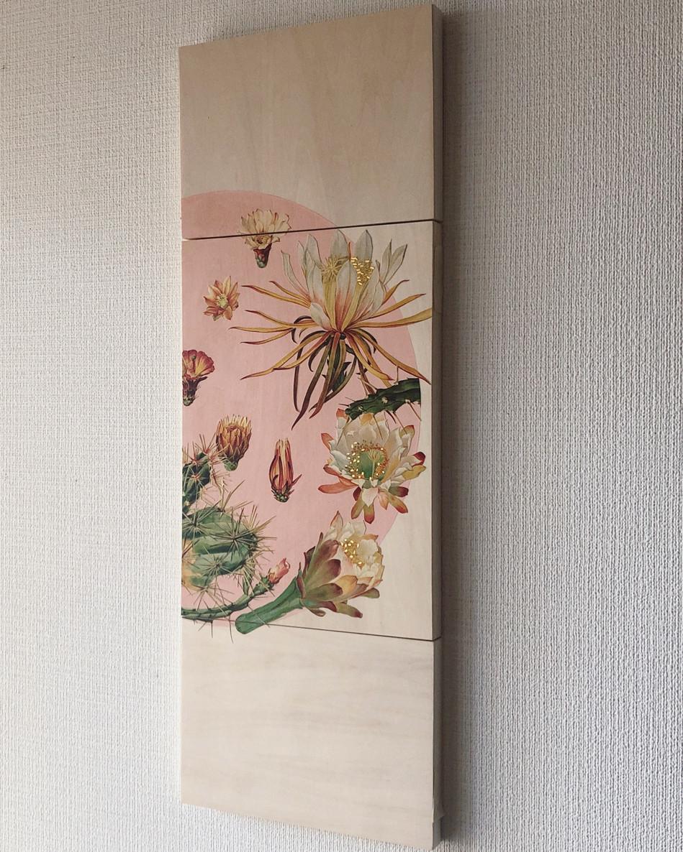 Cactus (flowers)