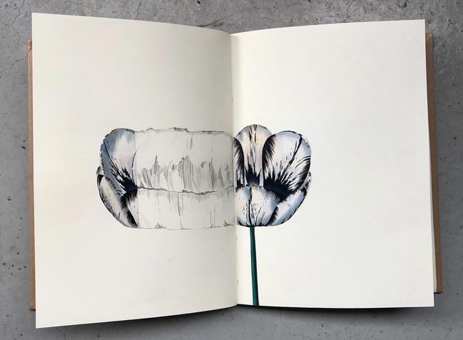 tulip, repeated