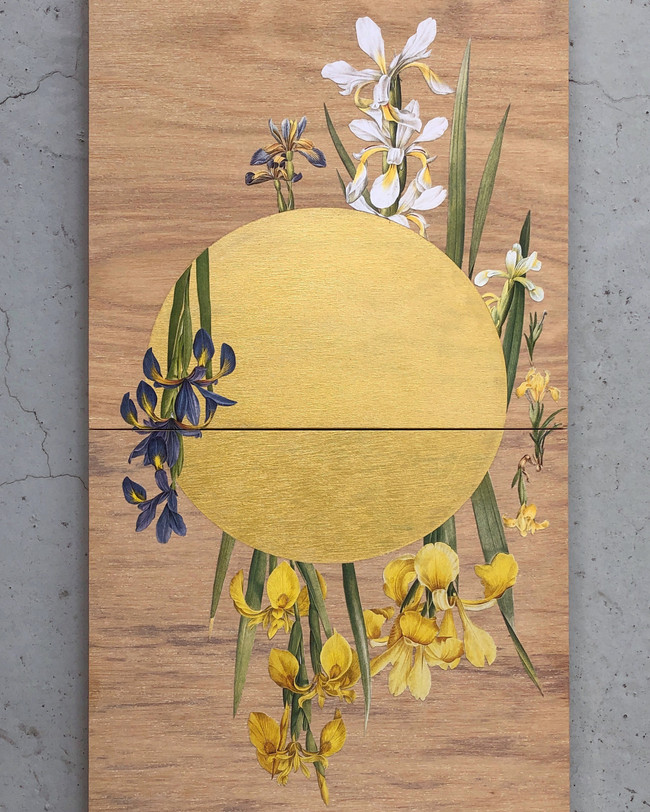 Iris (gold)