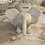 Thumbnail: Tirelire animaux