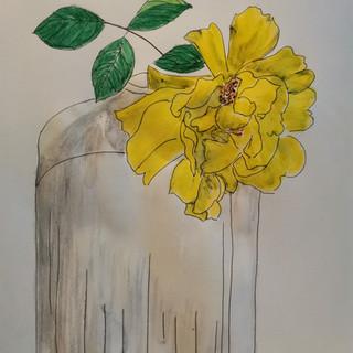 Dessin Botanique de Milla