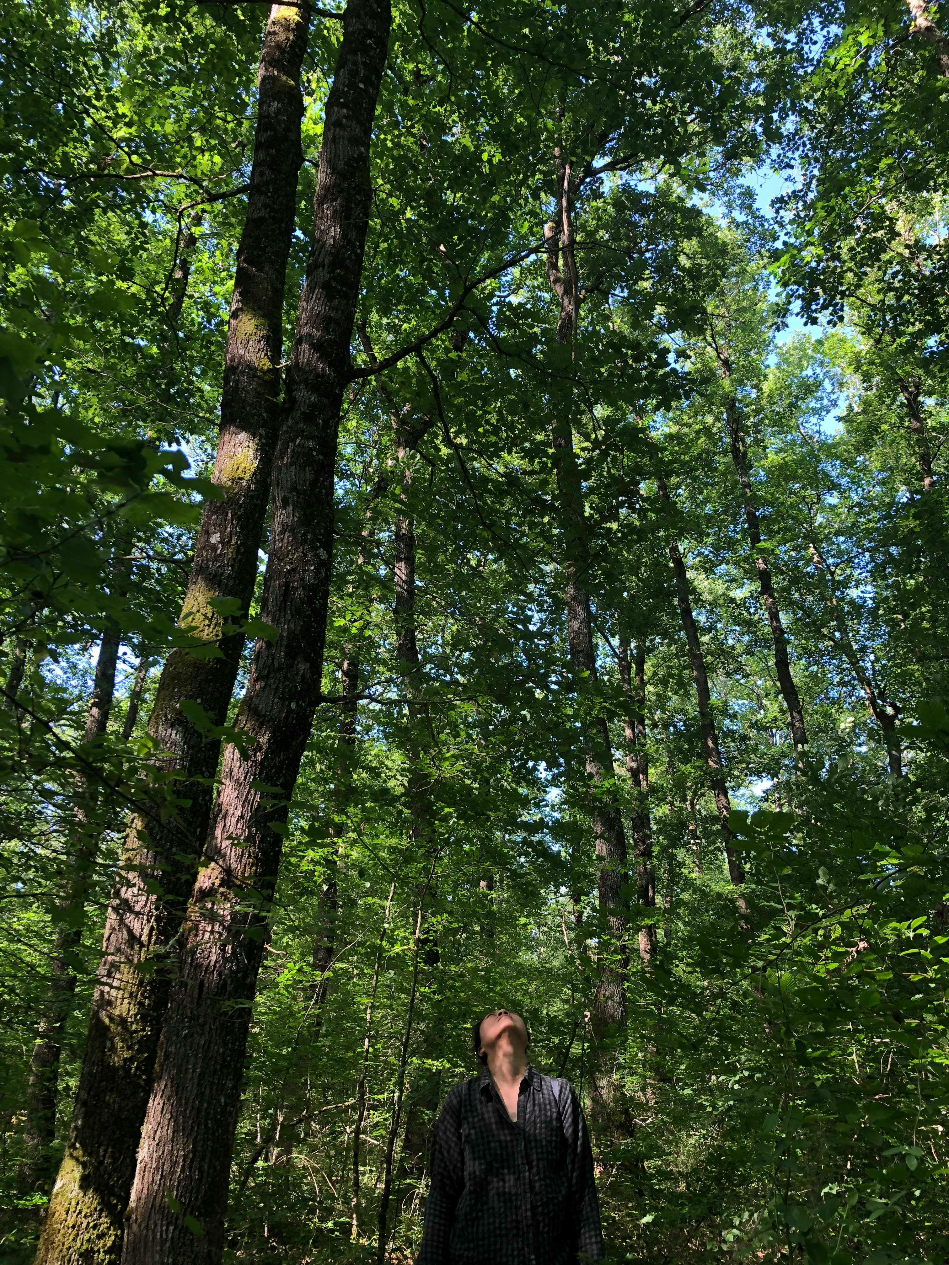 Balade en forêt-Le 26 mai 2018