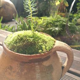 Création d'une plante à pot