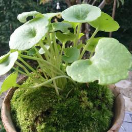 Cours d'une plante à pot