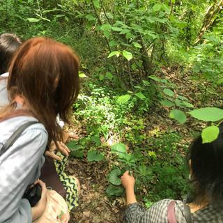 Stage en forêt-reconnaitre des plantes comestibles et médicales